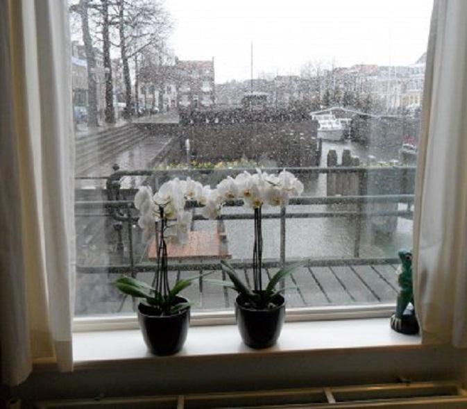 Achter de geraniums, pardon, de orchideeën. Het is vandaag hondenweer.
