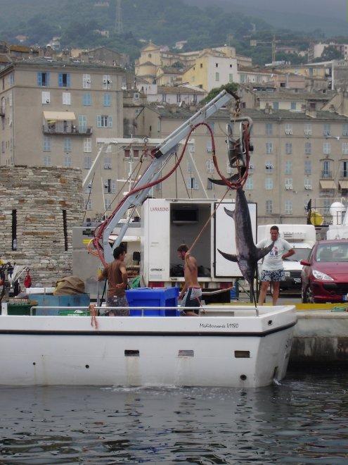 Een treurig gezicht in de oude haven van Bastia. Vissers hijsen een grote zwaardvis op de kant